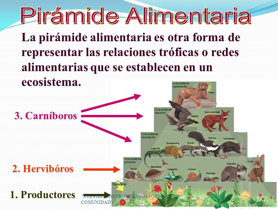La pirámide alimentaria es otra forma de representar las relaciones tróficas o redes alimentarias que se establecen en un ecosistema.