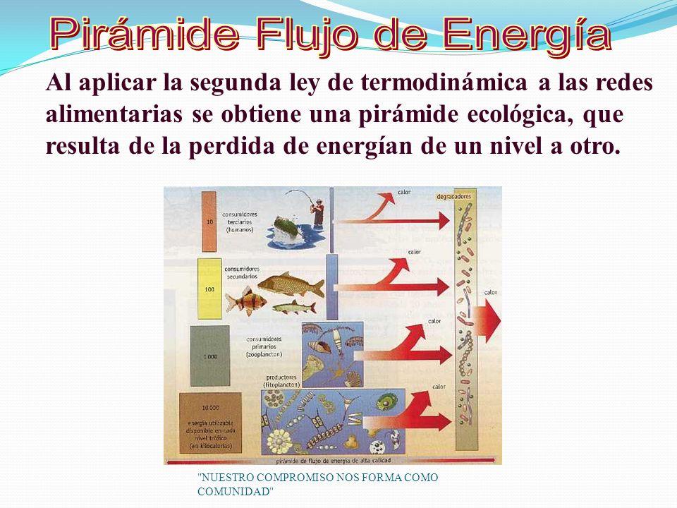 Al aplicar la segunda ley de termodinámica a las redes alimentarias se obtiene una pirámide ecológica, que resulta de la perdida de energían de un nivel a otro.
