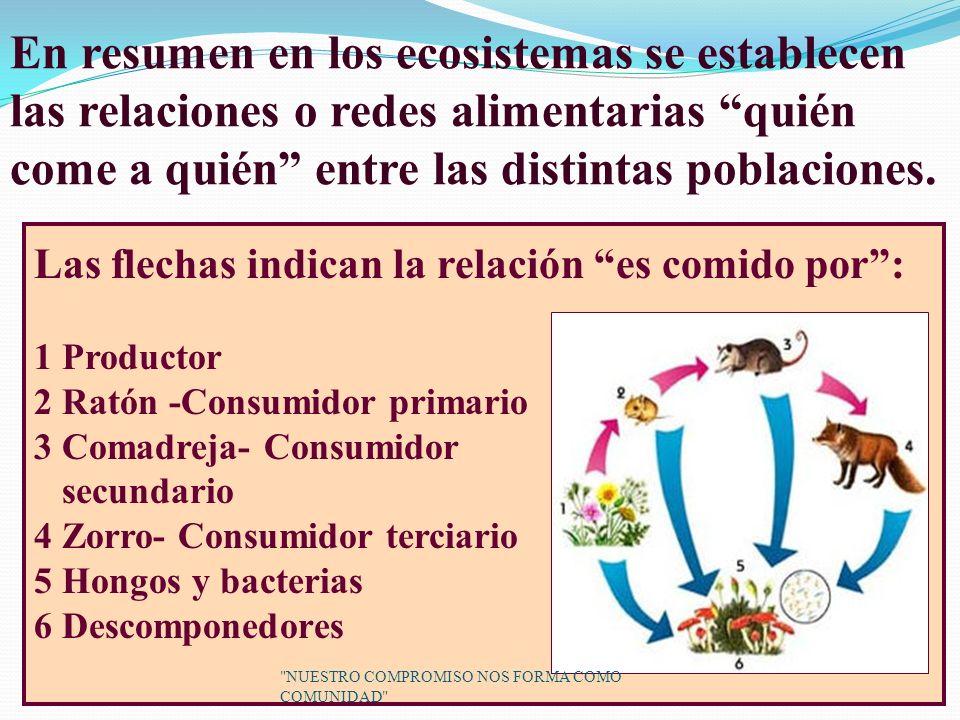 En resumen en los ecosistemas se establecen las relaciones o redes alimentarias quién come a quién entre las distintas poblaciones.