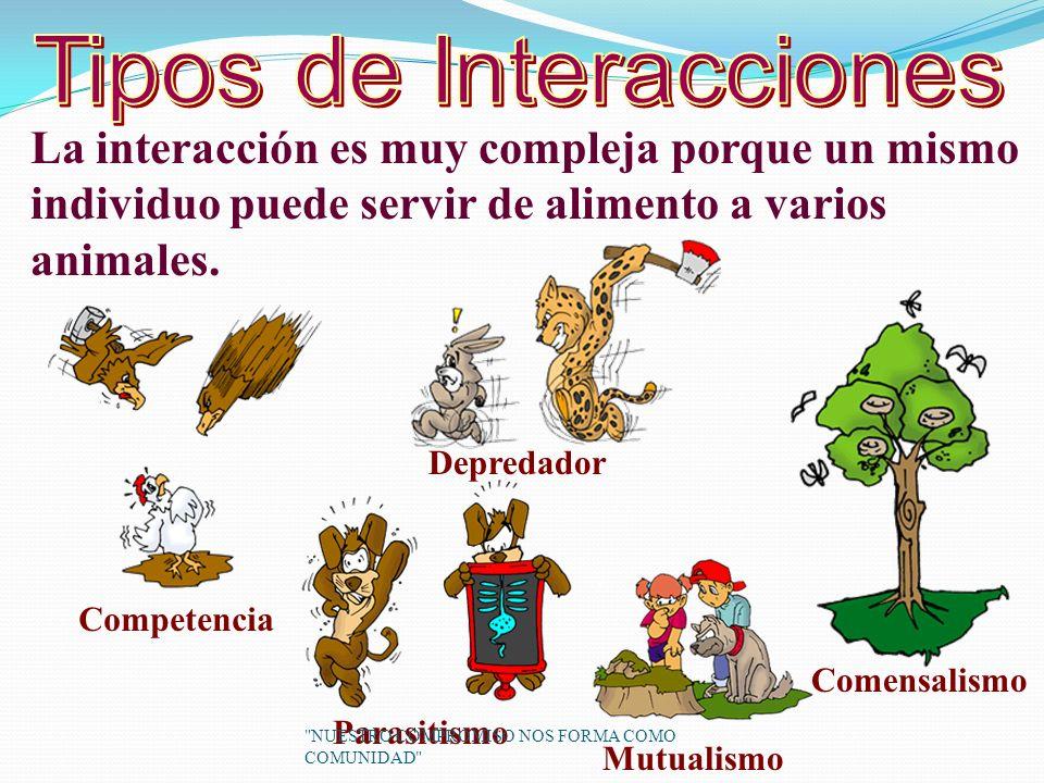 La interacción es muy compleja porque un mismo individuo puede servir de alimento a varios animales.