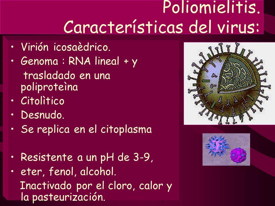 Poliomielitis. Características del virus: Virión icosaèdrico. Genoma : RNA lineal + y trasladado en una poliproteìna Citolìtico Desnudo. Se replica en