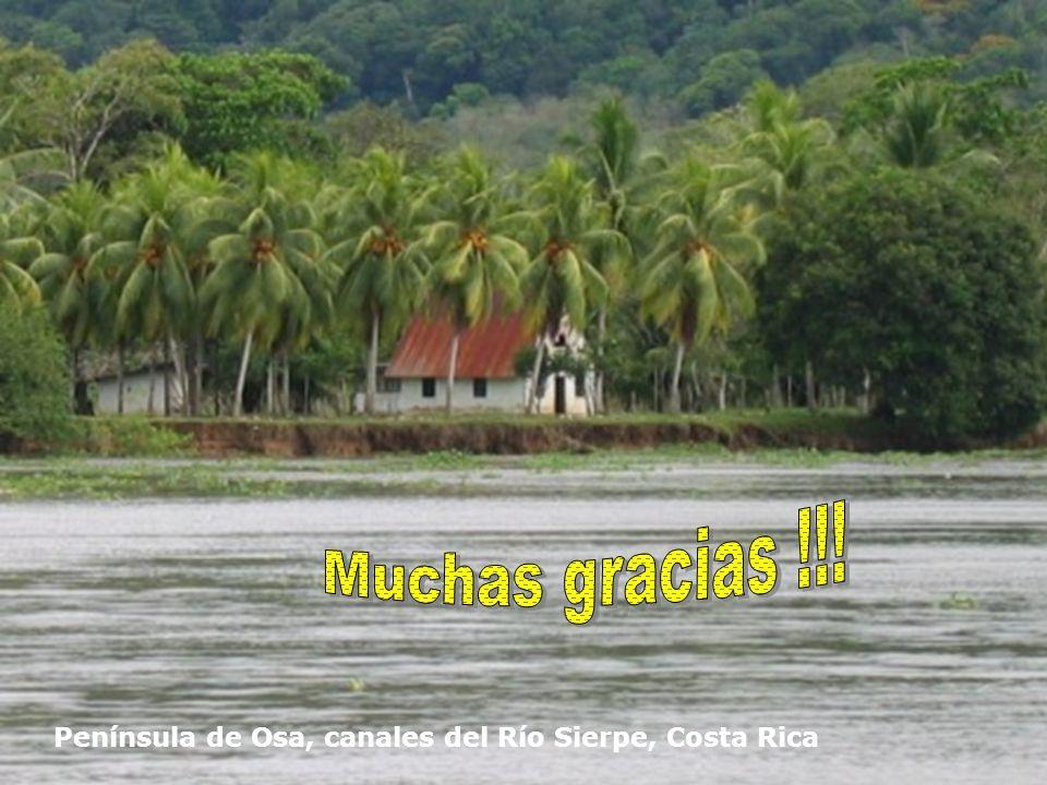 Península de Osa, canales del Río Sierpe, Costa Rica