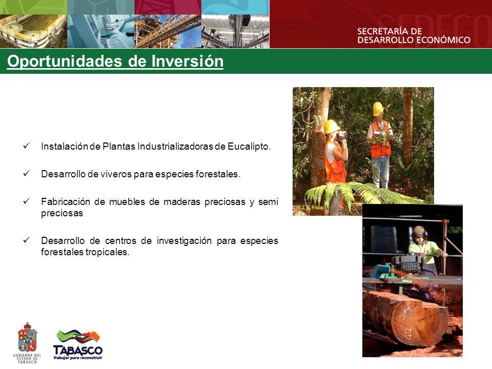 Oportunidades de Inversión Instalación de Plantas Industrializadoras de Eucalipto. Desarrollo de viveros para especies forestales. Fabricación de mueb