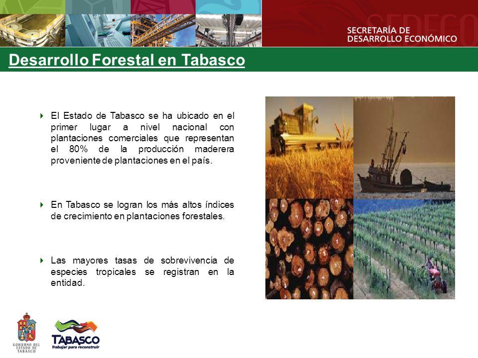 MUNICIPIOS CON MAYORES PLANTACIONES FORESTALES COMERCIALES Comisión Estatal Forestal (2007) MUNICIPIOSESPECIES BalancánCaoba, cedro, melina, ceiba, teca, eucalipto.