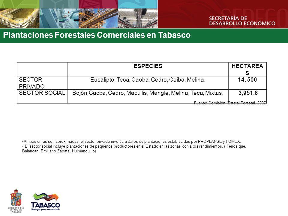 Plantaciones Forestales Comerciales en Tabasco Fuente: Comisión Estatal Forestal. 2007 ESPECIESHECTAREA S SECTOR PRIVADO Eucalipto, Teca, Caoba, Cedro