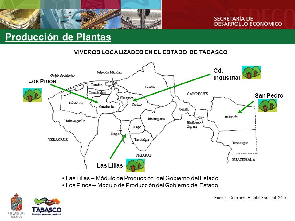 VIVEROS LOCALIZADOS EN EL ESTADO DE TABASCO Cd. Industrial Los Pinos San Pedro Las Lilias Las Lilias – Módulo de Producción del Gobierno del Estado Lo