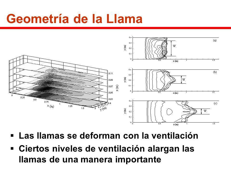 Geometría de la Llama Las llamas se deforman con la ventilación Ciertos niveles de ventilación alargan las llamas de una manera importante