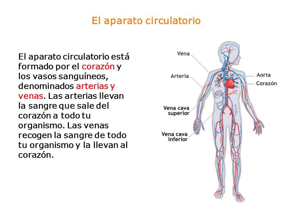 Tipos de vasos sanguíneos Las arterias, las venas y los capilares son vasos sanguíneos que transportan la sangre por todo el cuerpo.
