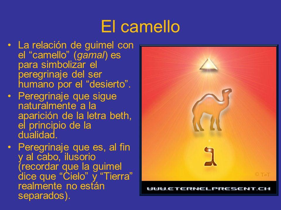 El camello La relación de guimel con el camello (gamal) es para simbolizar el peregrinaje del ser humano por el desierto. Peregrinaje que sigue natura