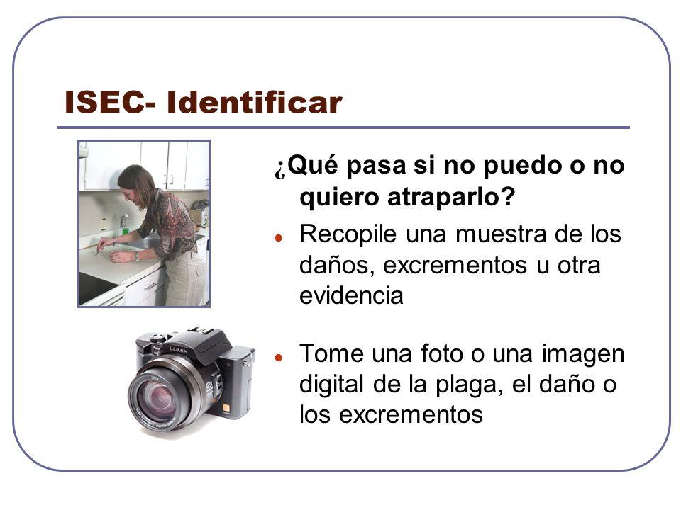 ISEC- Identificar ¿ Qué pasa si no puedo o no quiero atraparlo? Recopile una muestra de los daños, excrementos u otra evidencia Tome una foto o una im
