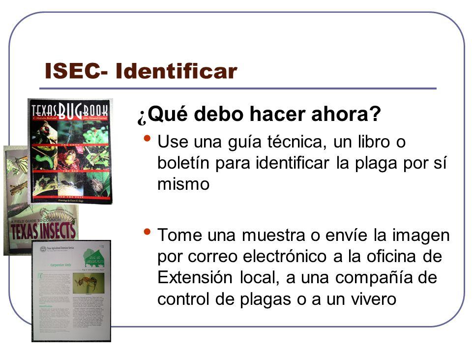 ISEC- Identificar ¿ Qué debo hacer ahora? Use una guía técnica, un libro o boletín para identificar la plaga por sí mismo Tome una muestra o envíe la