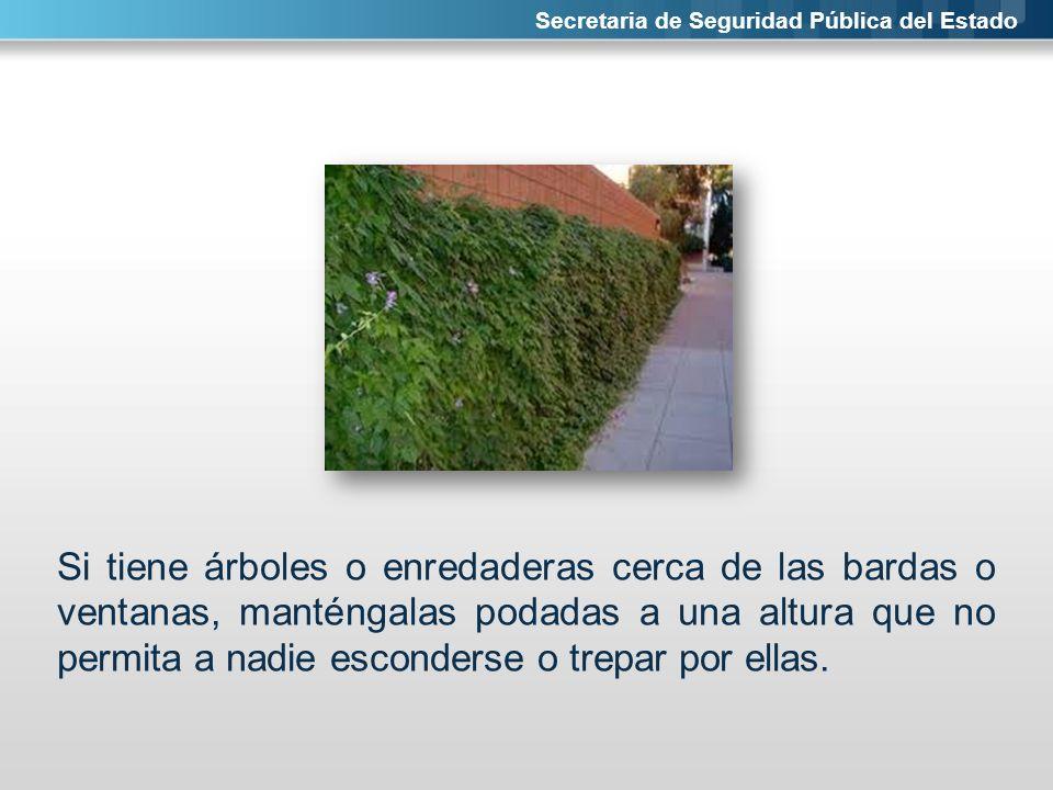 Secretaria de Seguridad Pública del Estado Si tiene árboles o enredaderas cerca de las bardas o ventanas, manténgalas podadas a una altura que no perm