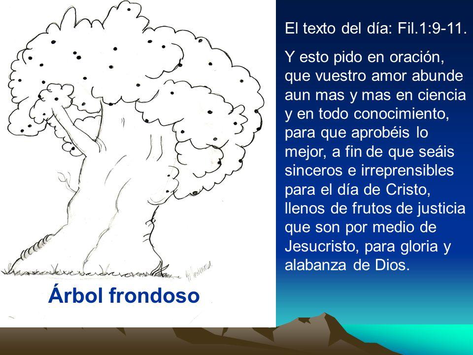 Árbol frondoso El texto del día: Fil.1:9-11. Y esto pido en oración, que vuestro amor abunde aun mas y mas en ciencia y en todo conocimiento, para que