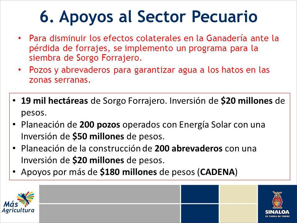 6. Apoyos al Sector Pecuario Para disminuir los efectos colaterales en la Ganadería ante la pérdida de forrajes, se implemento un programa para la sie
