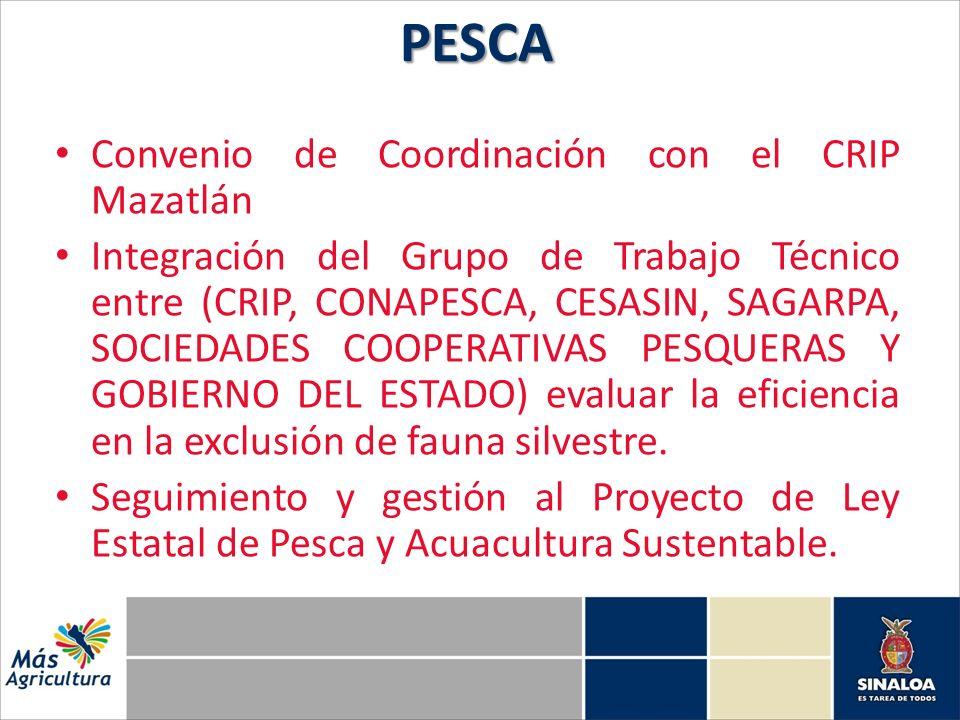 Convenio de Coordinación con el CRIP Mazatlán Integración del Grupo de Trabajo Técnico entre (CRIP, CONAPESCA, CESASIN, SAGARPA, SOCIEDADES COOPERATIV