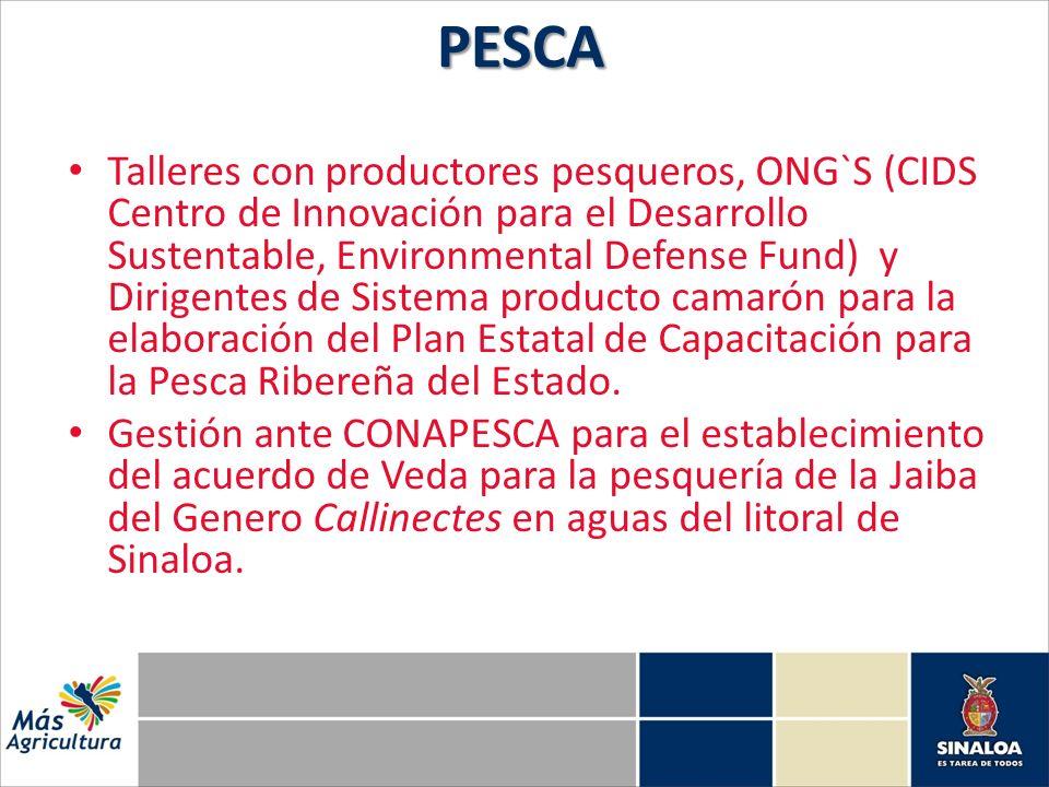 Talleres con productores pesqueros, ONG`S (CIDS Centro de Innovación para el Desarrollo Sustentable, Environmental Defense Fund) y Dirigentes de Sistema producto camarón para la elaboración del Plan Estatal de Capacitación para la Pesca Ribereña del Estado.
