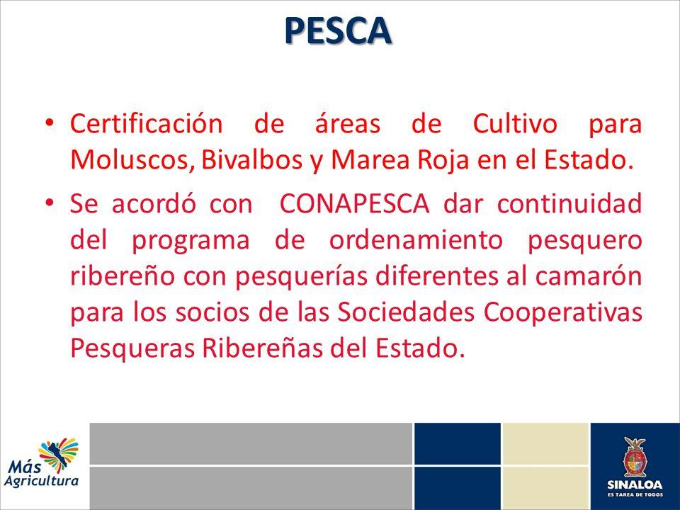 Certificación de áreas de Cultivo para Moluscos, Bivalbos y Marea Roja en el Estado. Se acordó con CONAPESCA dar continuidad del programa de ordenamie
