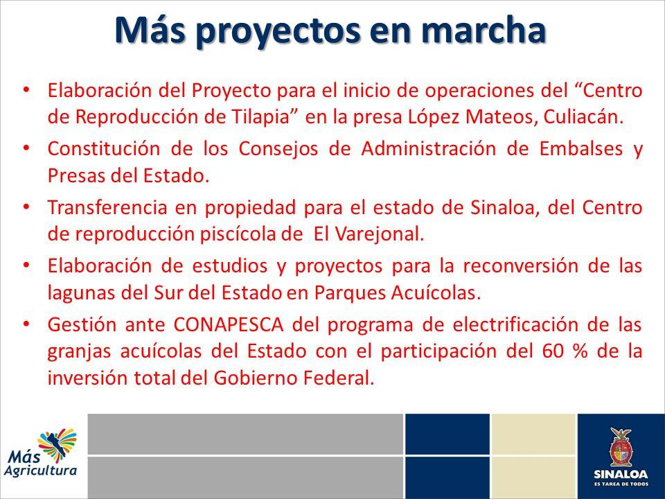 Elaboración del Proyecto para el inicio de operaciones del Centro de Reproducción de Tilapia en la presa López Mateos, Culiacán. Constitución de los C