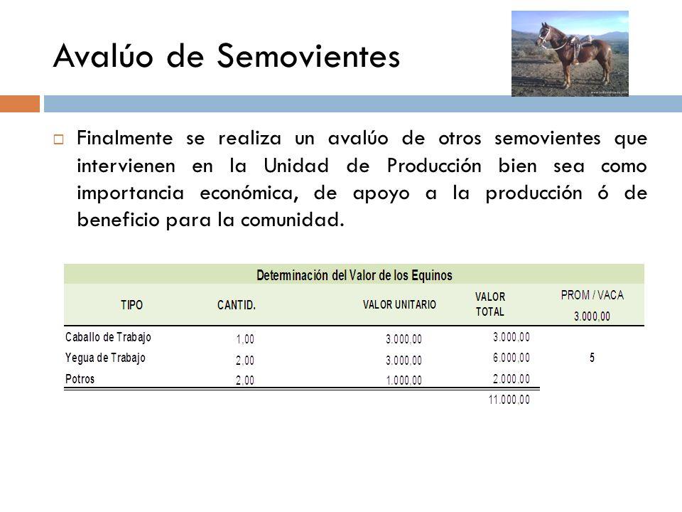 Avalúo de Semovientes Luego de avalúo de la Hembras bovinas se procederá a la Valoración del resto del rebaño bovino de acuerdo a los precios del merc