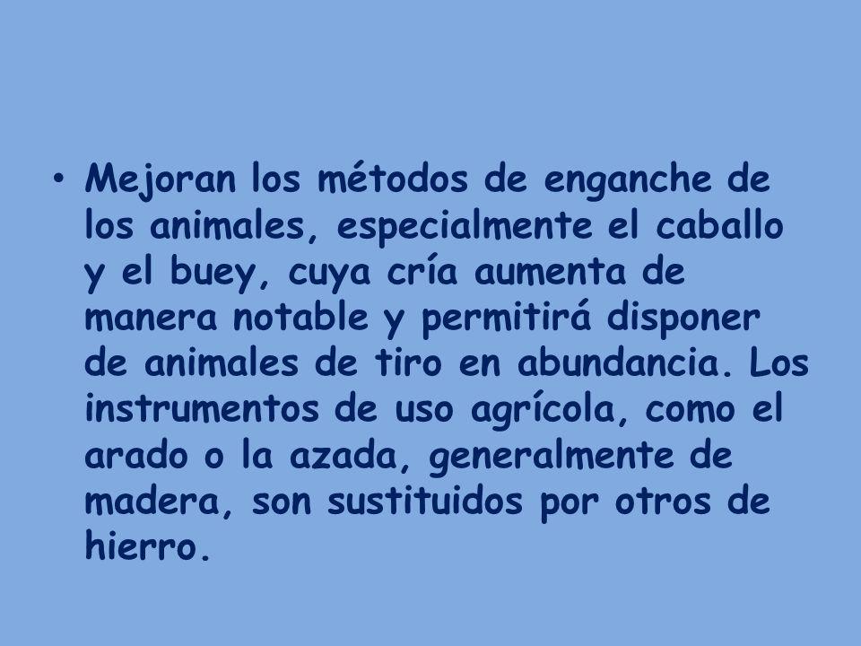 Mejoran los métodos de enganche de los animales, especialmente el caballo y el buey, cuya cría aumenta de manera notable y permitirá disponer de anima