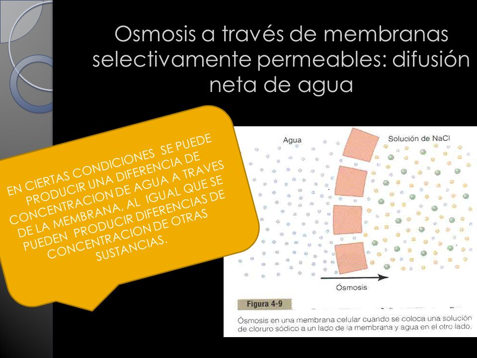 Osmosis a través de membranas selectivamente permeables: difusión neta de agua EN CIERTAS CONDICIONES SE PUEDE PRODUCIR UNA DIFERENCIA DE CONCENTRACION DE AGUA A TRAVES DE LA MEMBRANA, AL IGUAL QUE SE PUEDEN PRODUCIR DIFERENCIAS DE CONCENTRACION DE OTRAS SUSTANCIAS.
