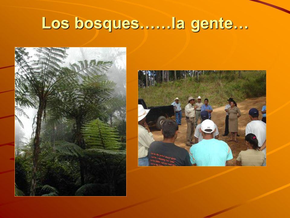 Los bosques……la gente…