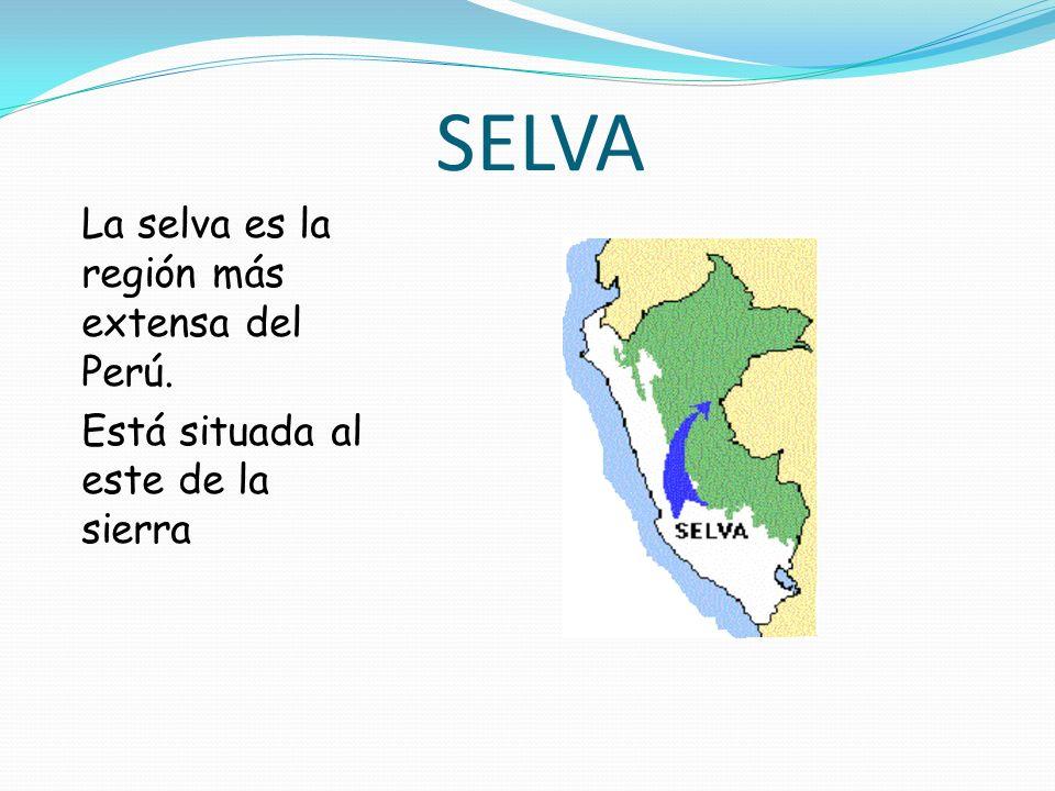 SELVA La selva es la región más extensa del Perú. Está situada al este de la sierra