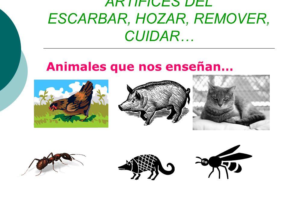ARTÍFICES DEL ESCARBAR, HOZAR, REMOVER, CUIDAR… Animales que nos enseñan…
