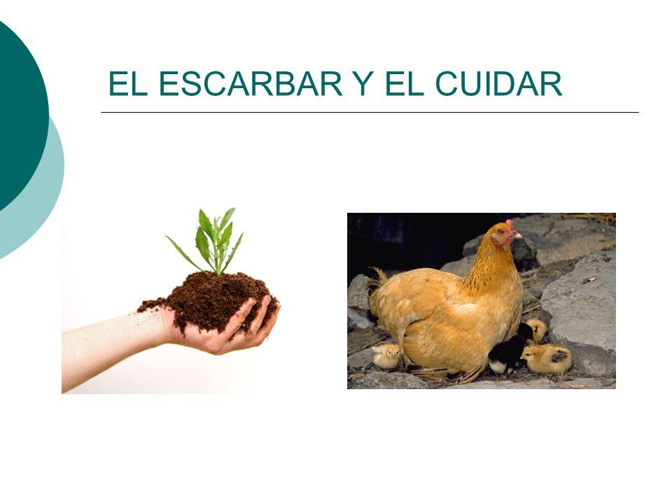 EL ESCARBAR Y EL CUIDAR
