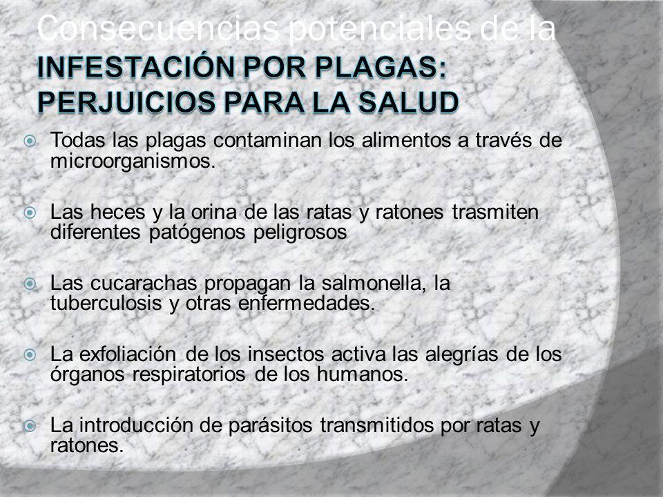 Todas las plagas contaminan los alimentos a través de microorganismos. Las heces y la orina de las ratas y ratones trasmiten diferentes patógenos peli