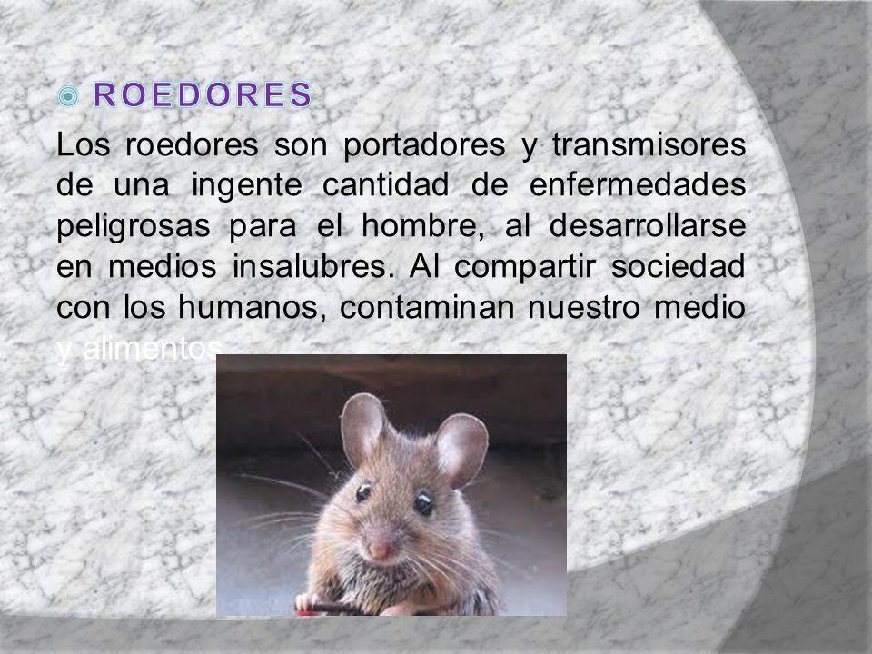 Todas las plagas contaminan los alimentos a través de microorganismos.