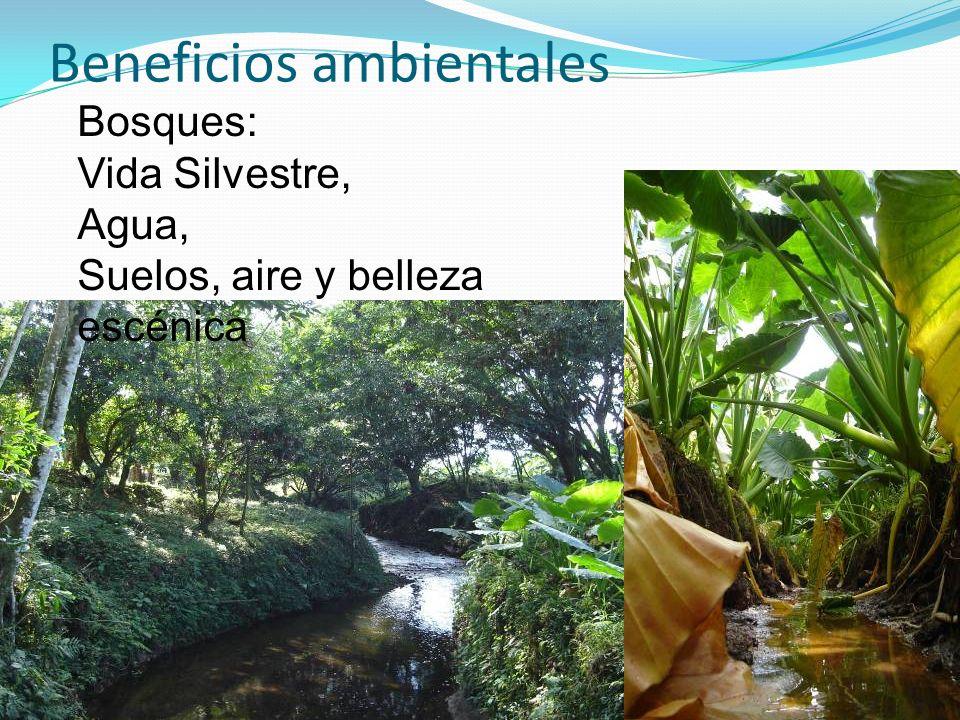 Beneficios ambientales Bosques: Vida Silvestre, Agua, Suelos, aire y belleza escénica