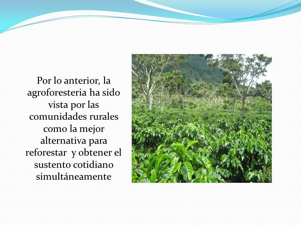 Por lo anterior, la agroforesteria ha sido vista por las comunidades rurales como la mejor alternativa para reforestar y obtener el sustento cotidiano