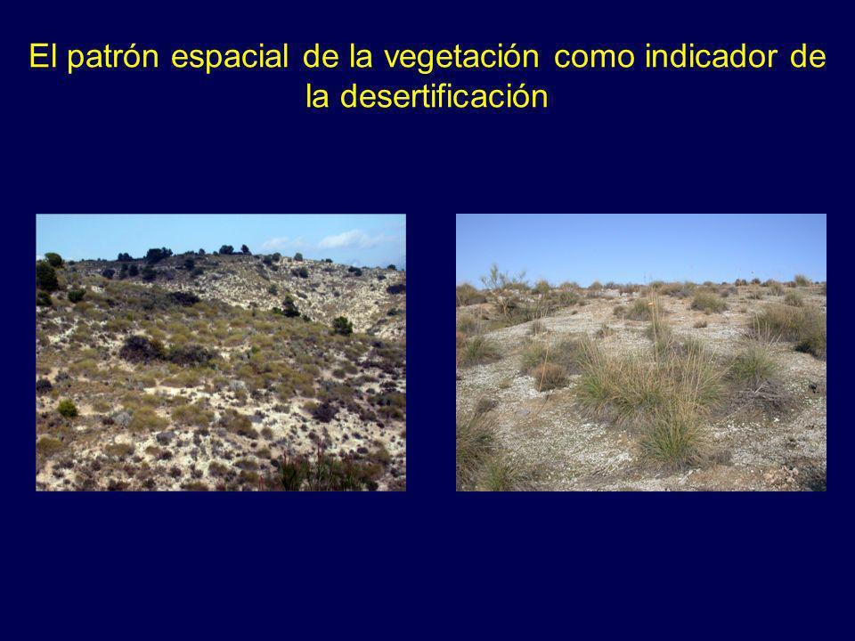 El patrón espacial de la vegetación como indicador de la desertificación