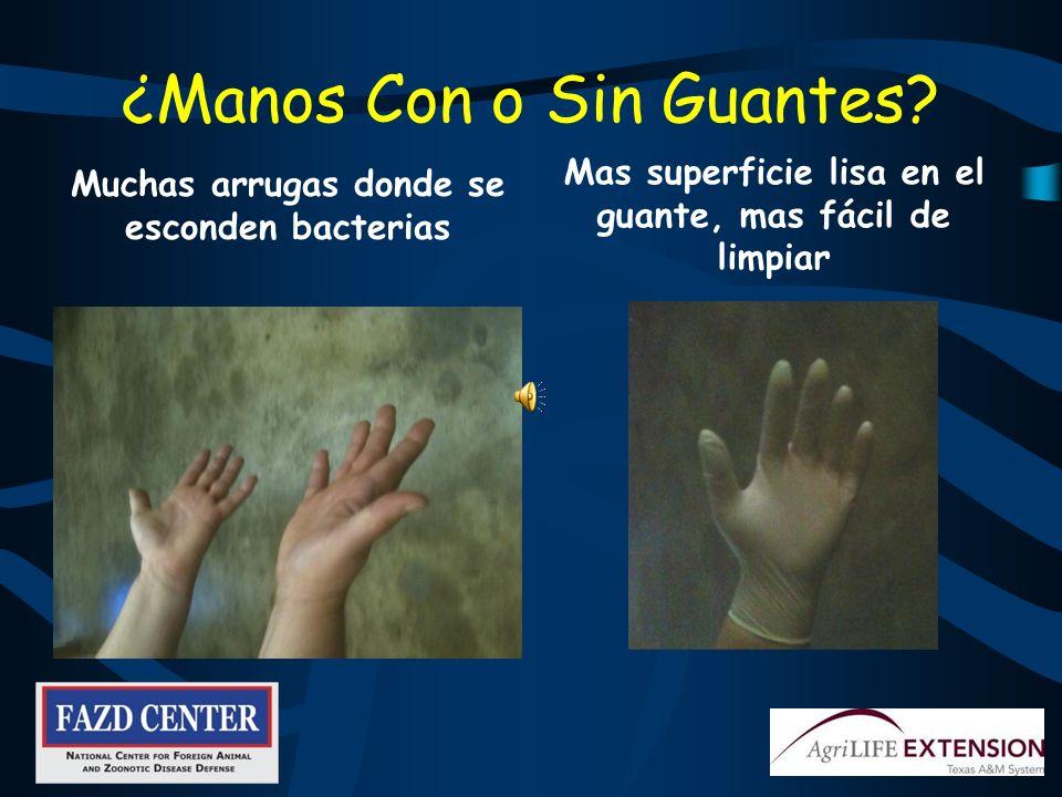Lave sus Manos Glo Germ simula Gérmenes Seis pasos: Moje sus manos Aplique jabón Lave por 20 segundos Enjuague Séquelas Cierre la llave con una toalla de papel