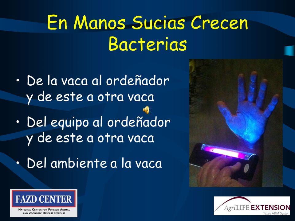 ¿Manos Con o Sin Guantes? Muchas arrugas donde se esconden bacterias Mas superficie lisa en el guante, mas fácil de limpiar