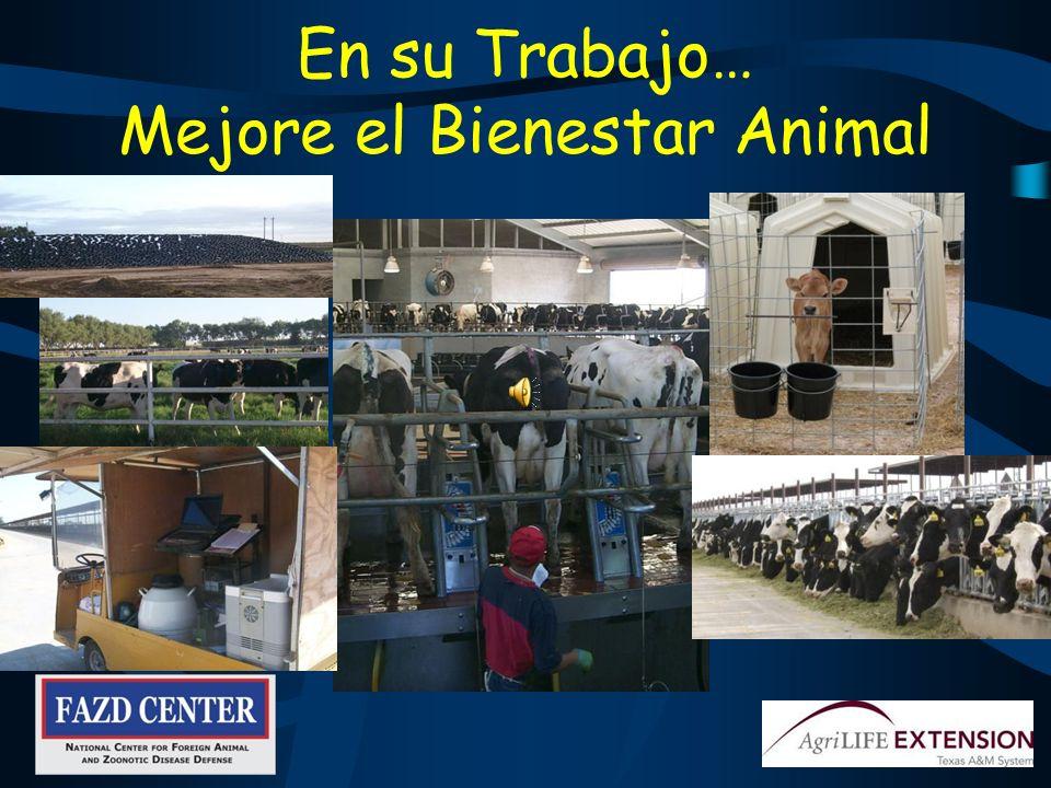 Reporte Animales enfermos Actitudes sospechosas de gente o animales Todo tipo de eventos sospechosos