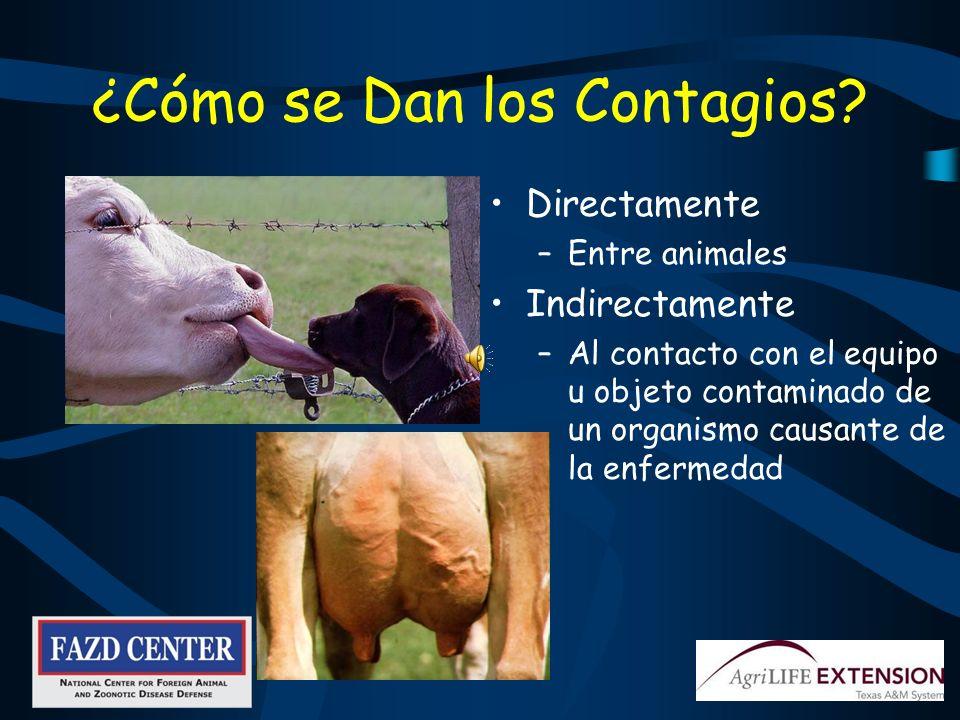 En Manos Sucias Crecen Bacterias De la vaca al ordeñador y de este a otra vaca Del equipo al ordeñador y de este a otra vaca Del ambiente a la vaca