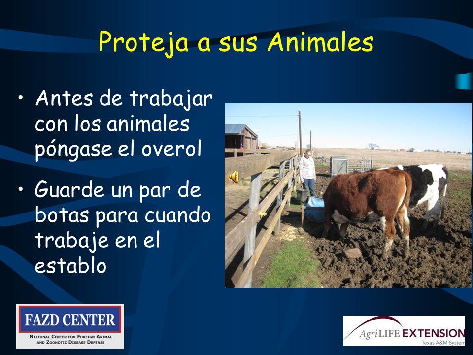 Recuerde, Si Observa Algo Inusual – REPORTELO! Lesiones Actividades sospechosas Visitantes de otros establos Comportamiento anormal del animal
