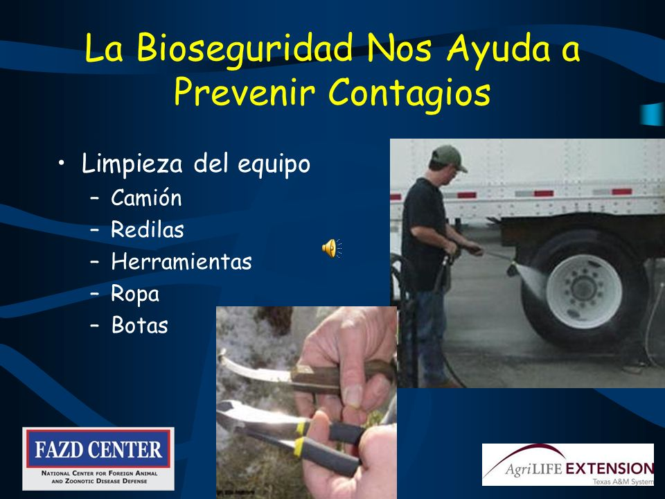 La Bioseguridad Nos Ayuda a Prevenir Contagios Limpieza del equipo –Camión –Redilas –Herramientas –Ropa –Botas