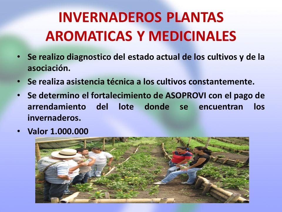 INVERNADEROS PLANTAS AROMATICAS Y MEDICINALES Se realizo diagnostico del estado actual de los cultivos y de la asociación. Se realiza asistencia técni
