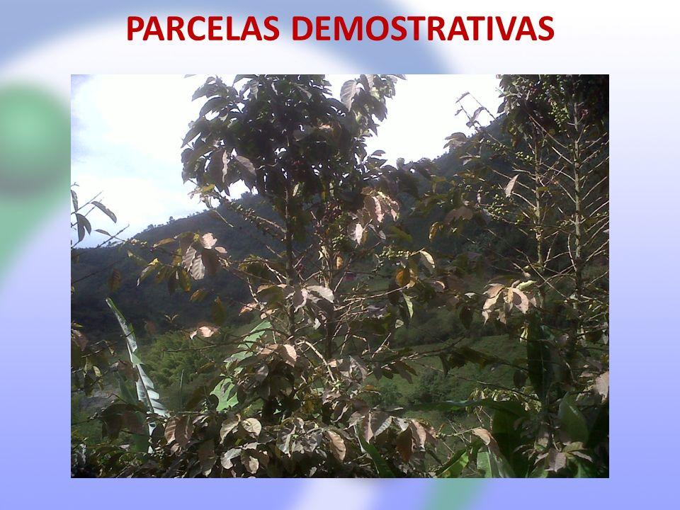 PARCELAS DEMOSTRATIVAS