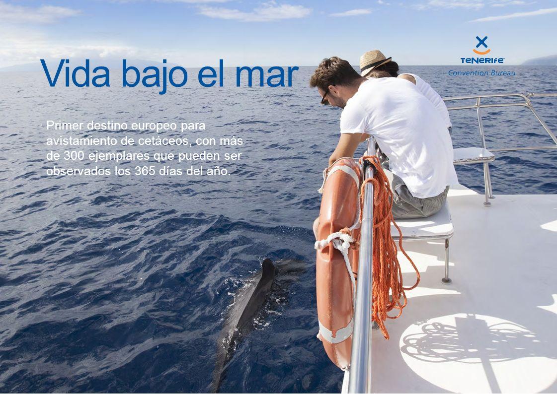 Primer destino europeo para avistamiento de cetáceos, con más de 300 ejemplares que pueden ser observados los 365 días del año. Vida bajo el mar
