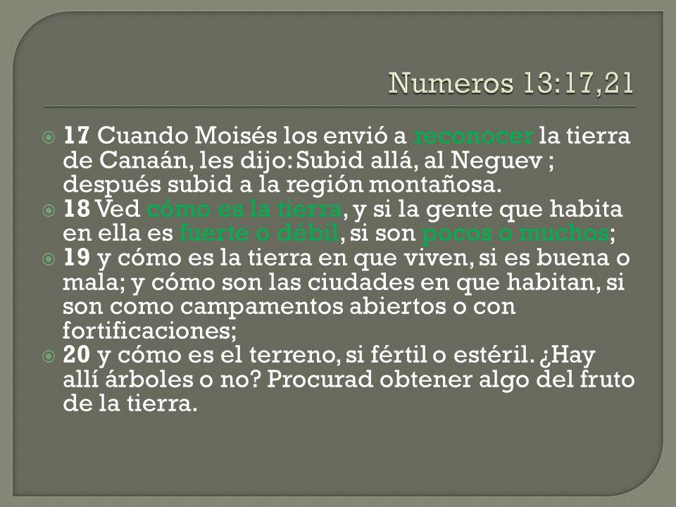 17 Cuando Moisés los envió a reconocer la tierra de Canaán, les dijo: Subid allá, al Neguev ; después subid a la región montañosa. 18 Ved cómo es la t