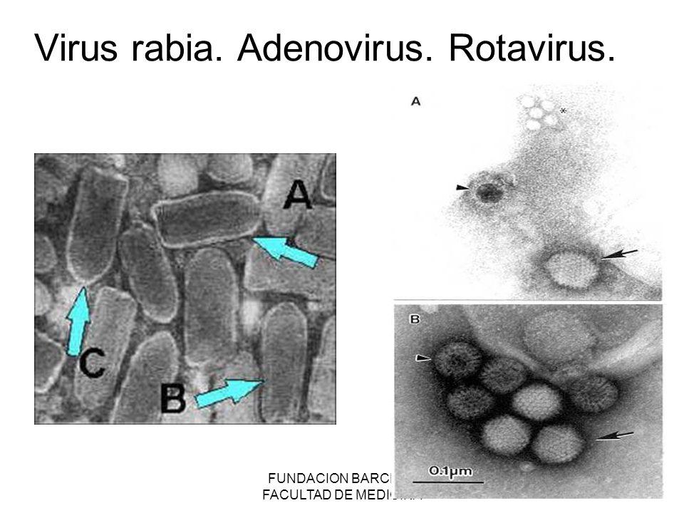 FUNDACION BARCELO FACULTAD DE MEDICINA Virus rabia. Adenovirus. Rotavirus.