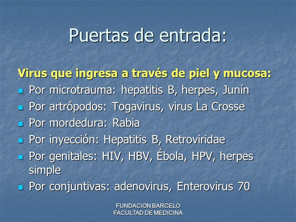 FUNDACION BARCELO FACULTAD DE MEDICINA Puertas de entrada: Virus que ingresa a través de piel y mucosa: Por microtrauma: hepatitis B, herpes, Junín Po
