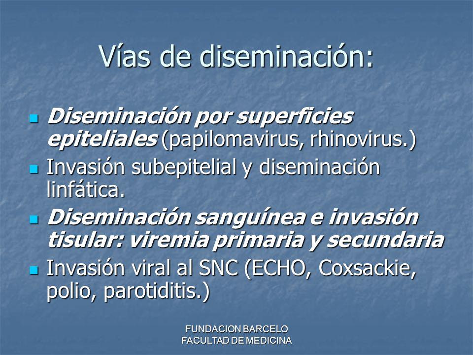 FUNDACION BARCELO FACULTAD DE MEDICINA Vías de diseminación: Diseminación por superficies epiteliales (papilomavirus, rhinovirus.) Diseminación por su
