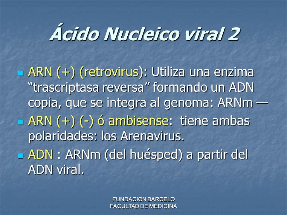 FUNDACION BARCELO FACULTAD DE MEDICINA Ácido Nucleico viral 2 ARN (+) (retrovirus): Utiliza una enzima trascriptasa reversa formando un ADN copia, que