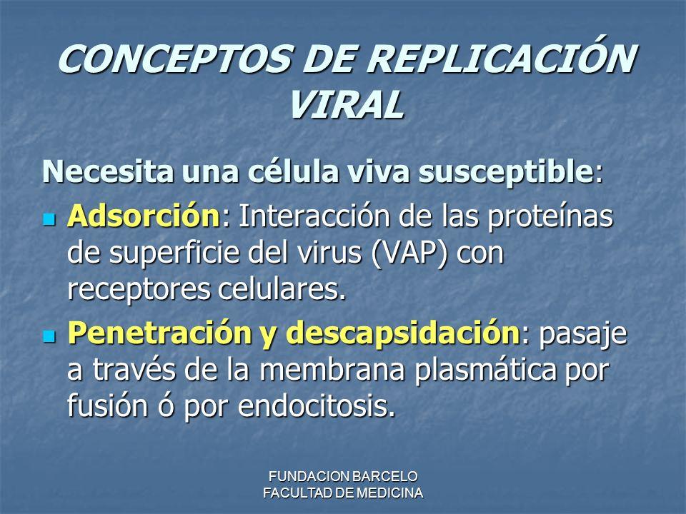 FUNDACION BARCELO FACULTAD DE MEDICINA CONCEPTOS DE REPLICACIÓN VIRAL Necesita una célula viva susceptible: Adsorción: Interacción de las proteínas de