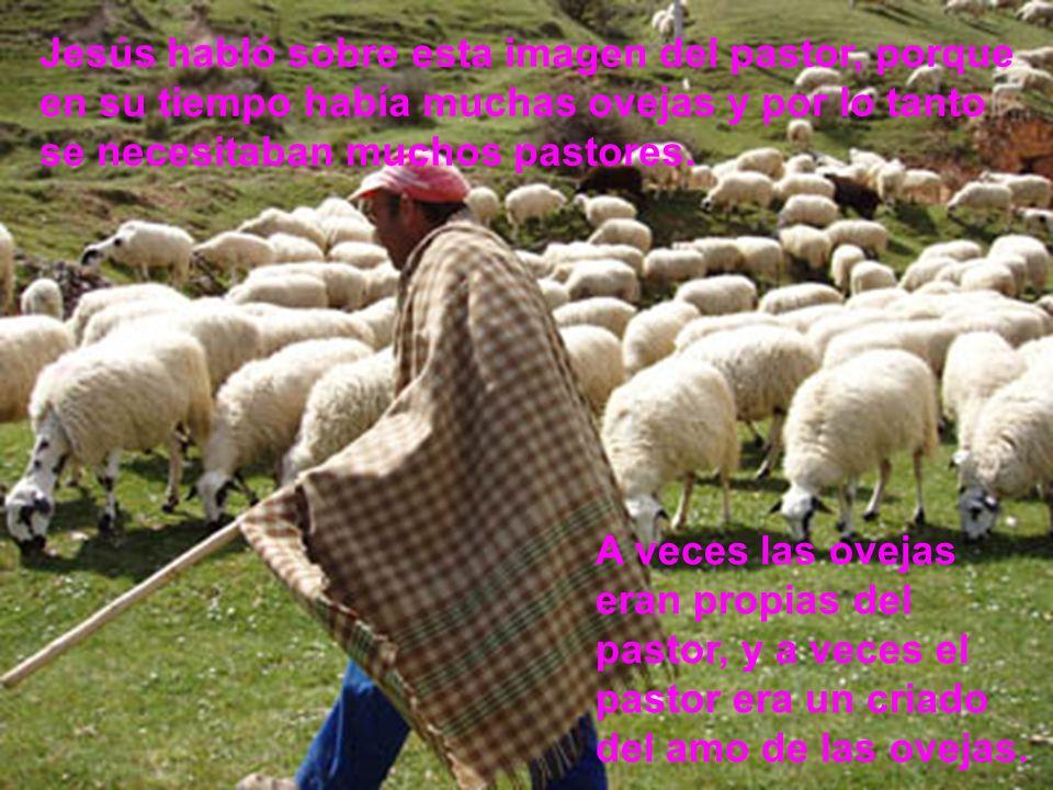 Jesús habló sobre esta imagen del pastor, porque en su tiempo había muchas ovejas y por lo tanto se necesitaban muchos pastores.